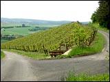 Wein- und Gesundheitsweg