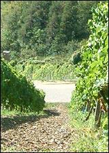 Erlenbacher Weinwanderweg 6
