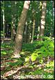 Rundwanderweg Lohr - Partenstein (Weg Nr. 5b)